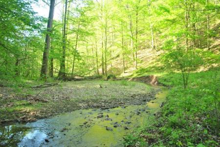 creek-sun